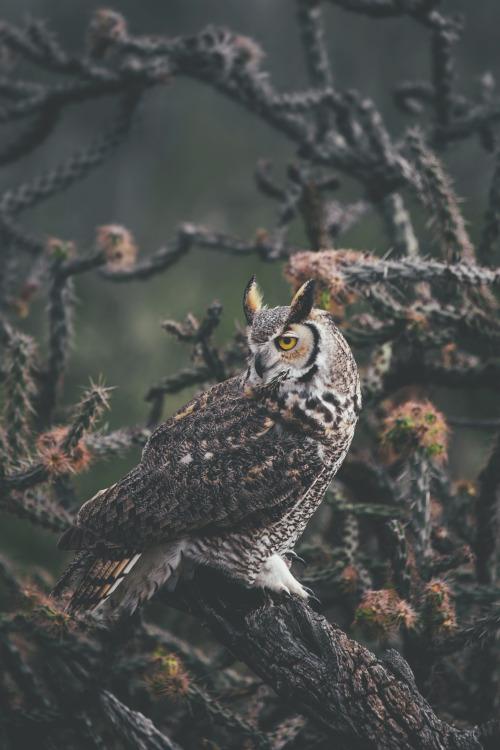 banshy: Arizona Owl // Dylan Furst 25
