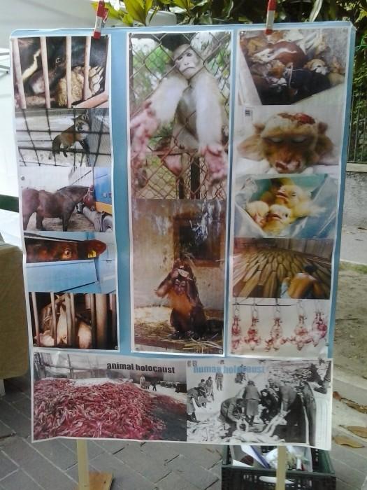 01.06.2014 TAVOLO INFORMATIVO - ARCO TN ALLA FESTA VEG DEGLI ANIMALI 70