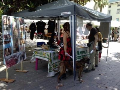 01.06.2014 TAVOLO INFORMATIVO - ARCO TN ALLA FESTA VEG DEGLI ANIMALI 34