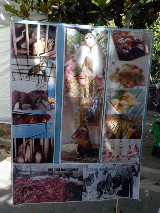01.06.2014 TAVOLO INFORMATIVO - ARCO TN ALLA FESTA VEG DEGLI ANIMALI 91