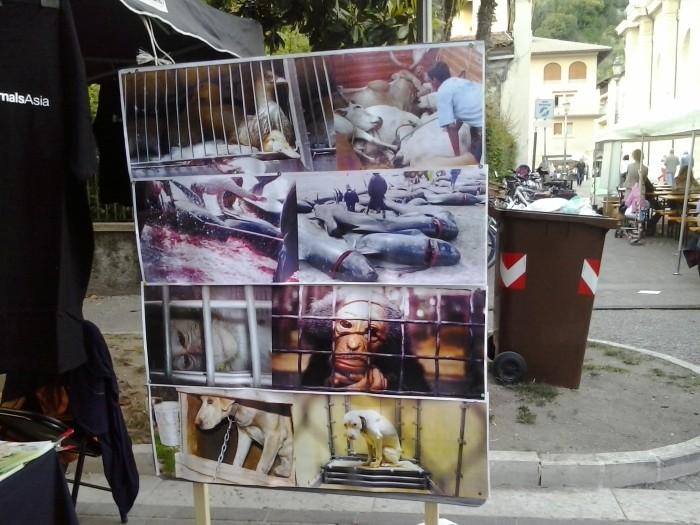01.06.2014 TAVOLO INFORMATIVO - ARCO TN ALLA FESTA VEG DEGLI ANIMALI 100