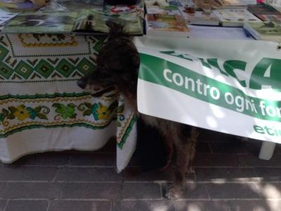 01.06.2014 TAVOLO INFORMATIVO - ARCO TN ALLA FESTA VEG DEGLI ANIMALI 7