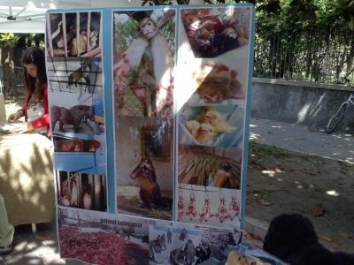 01.06.2014 TAVOLO INFORMATIVO - ARCO TN ALLA FESTA VEG DEGLI ANIMALI 10