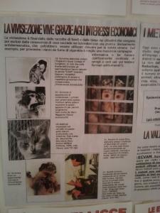 BIO VEGAN FEST 2011 - BASSANO DEL GRAPPA 159