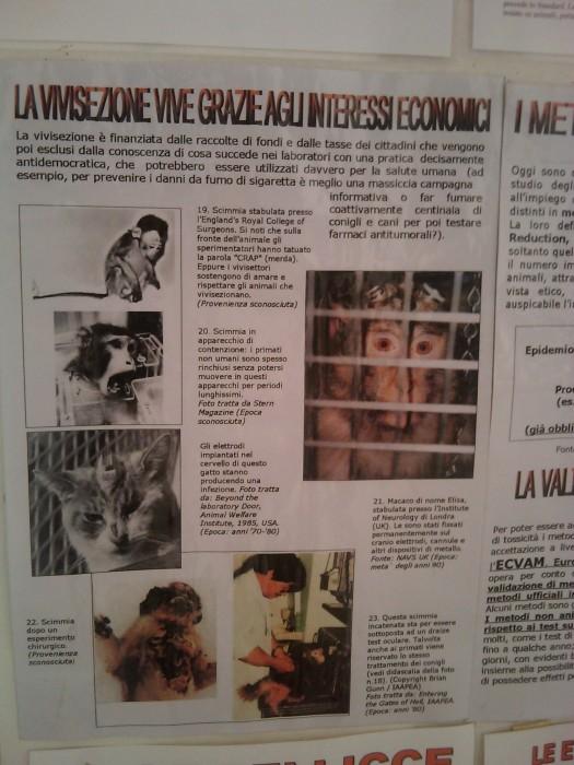 BIO VEGAN FEST 2011 - BASSANO DEL GRAPPA 389