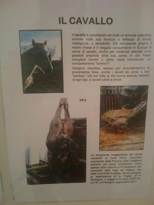 BIO VEGAN FEST 2011 - BASSANO DEL GRAPPA 398