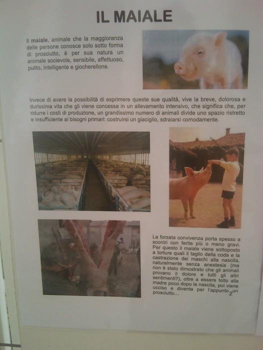 BIO VEGAN FEST 2011 - BASSANO DEL GRAPPA 400