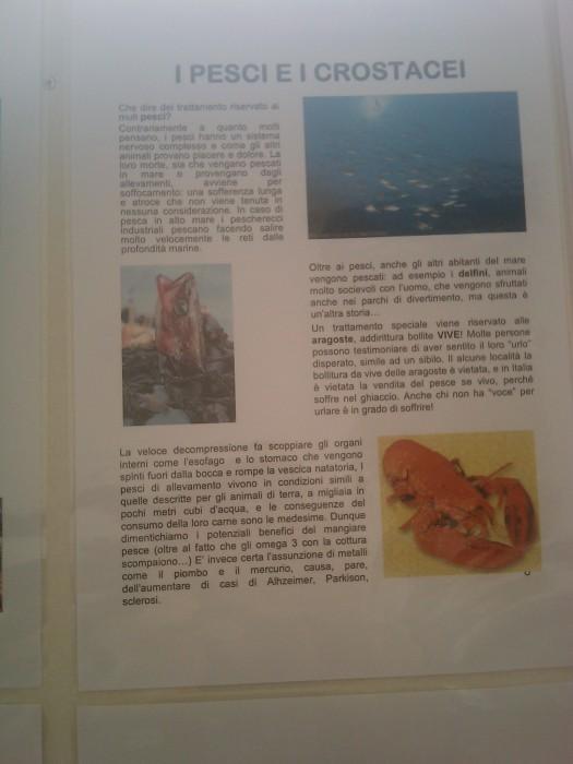 BIO VEGAN FEST 2011 - BASSANO DEL GRAPPA 403