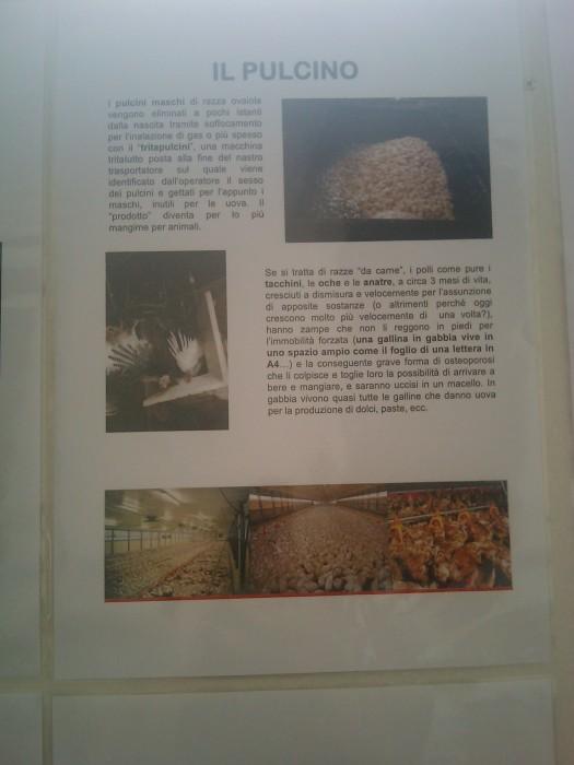 BIO VEGAN FEST 2011 - BASSANO DEL GRAPPA 455