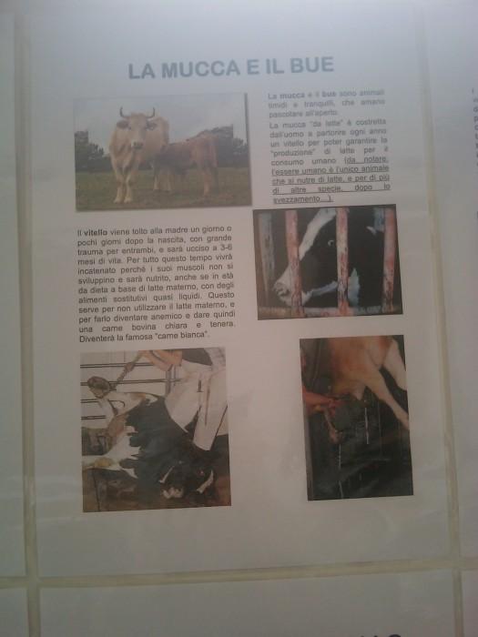 BIO VEGAN FEST 2011 - BASSANO DEL GRAPPA 458
