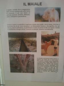 BIO VEGAN FEST 2011 - BASSANO DEL GRAPPA 7
