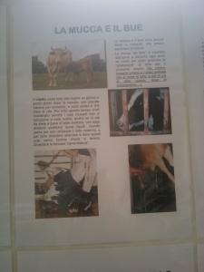 BIO VEGAN FEST 2011 - BASSANO DEL GRAPPA 14