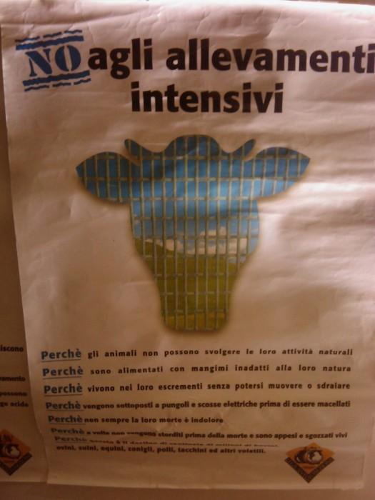 BIO VEGAN FEST 2011 - BASSANO DEL GRAPPA 250