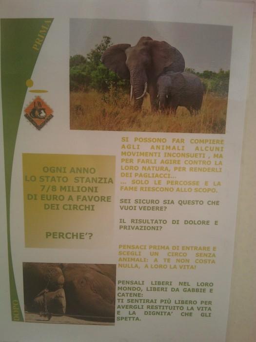 BIO VEGAN FEST 2011 - BASSANO DEL GRAPPA 359