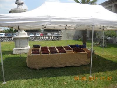 BIO VEGAN FEST 2011 - BASSANO DEL GRAPPA 136