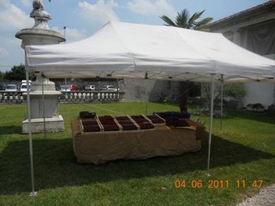 BIO VEGAN FEST 2011 - BASSANO DEL GRAPPA 149