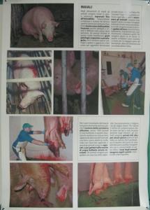MOSTRA SUI MACELLI - FA LA COSA GIUSTA OTTOBRE 2012 3