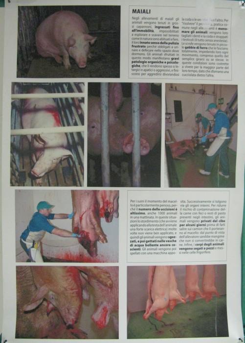 MOSTRA SUI MACELLI - FA LA COSA GIUSTA OTTOBRE 2012 253