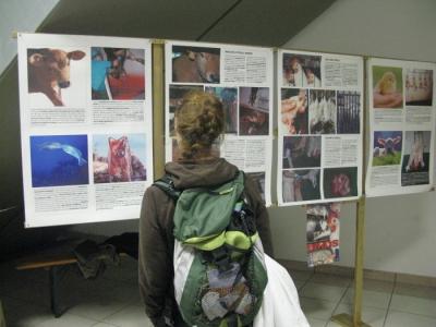 MOSTRA SUI MACELLI - FA LA COSA GIUSTA OTTOBRE 2012 15