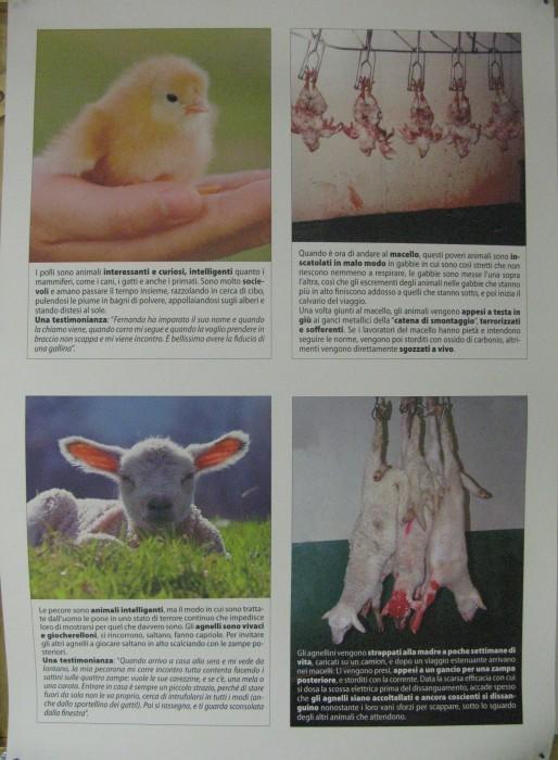 MOSTRA SUI MACELLI - FA LA COSA GIUSTA OTTOBRE 2012 286