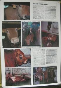 MOSTRA SUI MACELLI - FA LA COSA GIUSTA OTTOBRE 2012 89