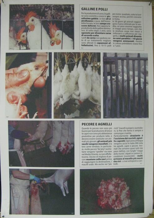 MOSTRA SUI MACELLI - FA LA COSA GIUSTA OTTOBRE 2012 372