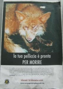 MOSTRA SUI MACELLI - FA LA COSA GIUSTA OTTOBRE 2012 185
