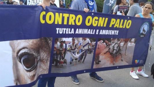 Manifestazione contro il Palio di Siena - 16.08.2015 39