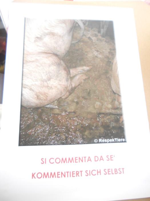 Bolzano 04.02.2012 manifestazione contro lo sfruttamento degli animali 171
