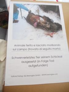 Bolzano 04.02.2012 manifestazione contro lo sfruttamento degli animali 92