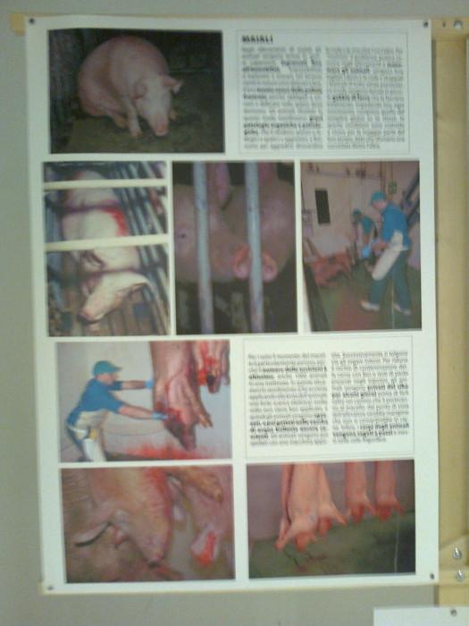 FA' LA COSA GIUSTA 2011 - MOSTRA ANIMALISTA 255