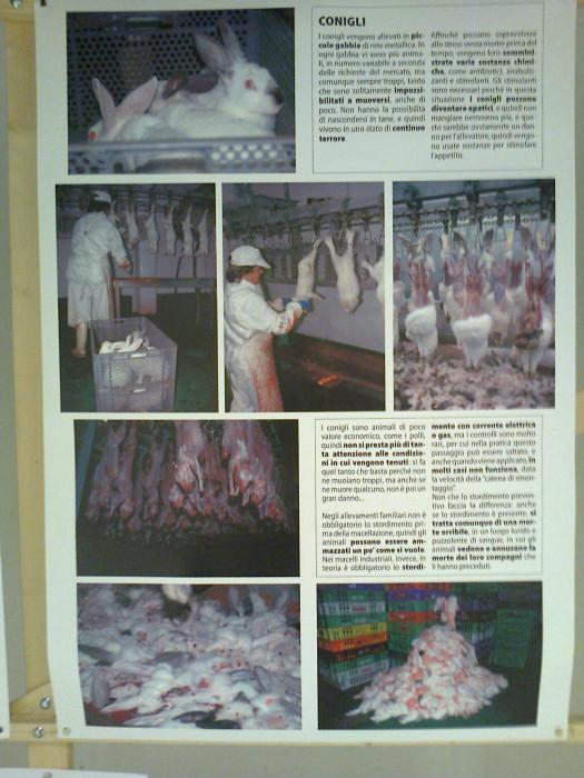 FA' LA COSA GIUSTA 2011 - MOSTRA ANIMALISTA 290