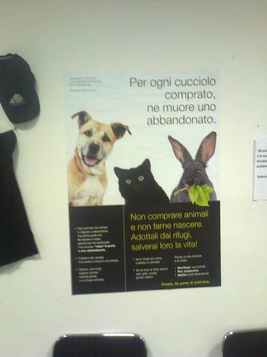 FA' LA COSA GIUSTA 2011 - MOSTRA ANIMALISTA 292