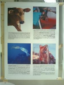 FA' LA COSA GIUSTA 2011 - MOSTRA ANIMALISTA 149
