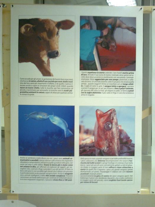 FA' LA COSA GIUSTA 2011 - MOSTRA ANIMALISTA 300