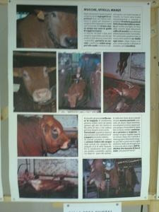 FA' LA COSA GIUSTA 2011 - MOSTRA ANIMALISTA 8
