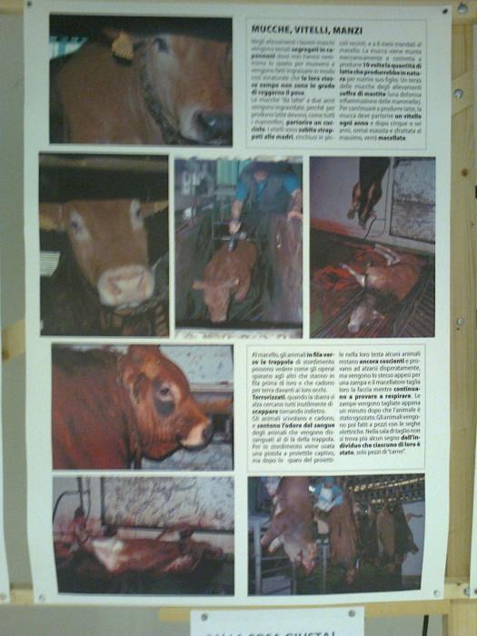 FA' LA COSA GIUSTA 2011 - MOSTRA ANIMALISTA 159