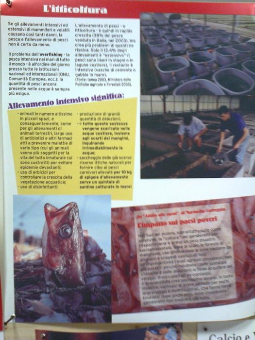FA' LA COSA GIUSTA 2011 - MOSTRA ANIMALISTA 174