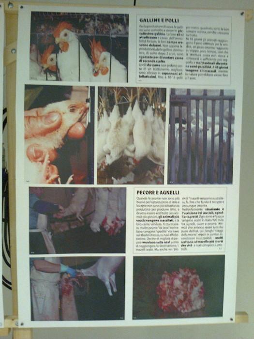 FA' LA COSA GIUSTA 2011 - MOSTRA ANIMALISTA 185
