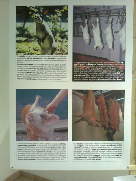 FA' LA COSA GIUSTA 2011 - MOSTRA ANIMALISTA 211