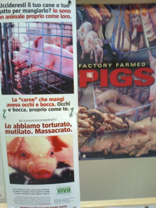FA' LA COSA GIUSTA 2011 - MOSTRA ANIMALISTA 219