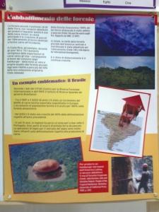 FA' LA COSA GIUSTA 2011 - MOSTRA ANIMALISTA 81