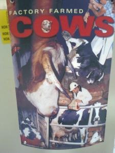 FA' LA COSA GIUSTA 2011 - MOSTRA ANIMALISTA 92