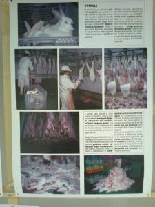 FA' LA COSA GIUSTA 2011 - MOSTRA ANIMALISTA 93