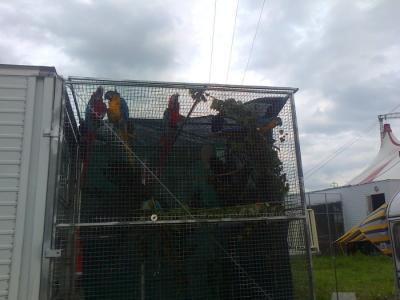 Presidio circo Orfei - Pergine Valsugana 24.06.2011 16