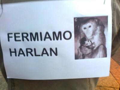 TRENTO - 03.03.2012 - TAVOLO INFORMATIVO SUGLI ORRORI DELLA VIVISEZIONE 4