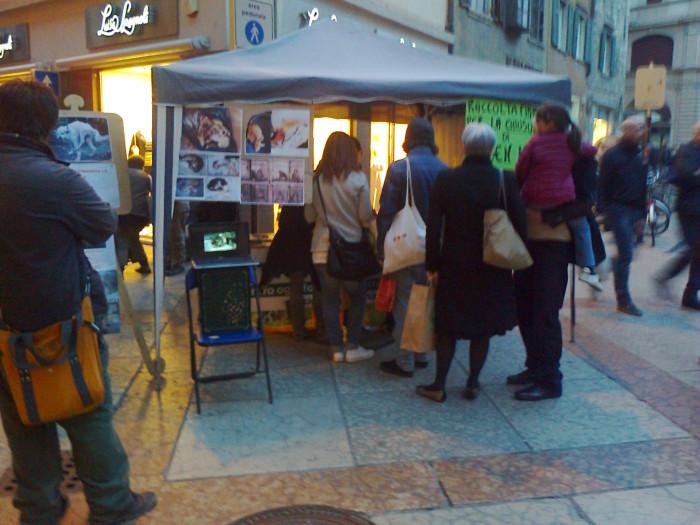 TRENTO - 03.03.2012 - TAVOLO INFORMATIVO SUGLI ORRORI DELLA VIVISEZIONE 97
