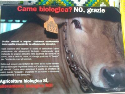 TRENTO - 03.03.2012 - TAVOLO INFORMATIVO SUGLI ORRORI DELLA VIVISEZIONE 8