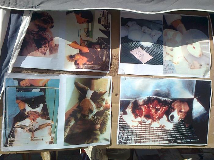 TRENTO - 03.03.2012 - TAVOLO INFORMATIVO SUGLI ORRORI DELLA VIVISEZIONE 103