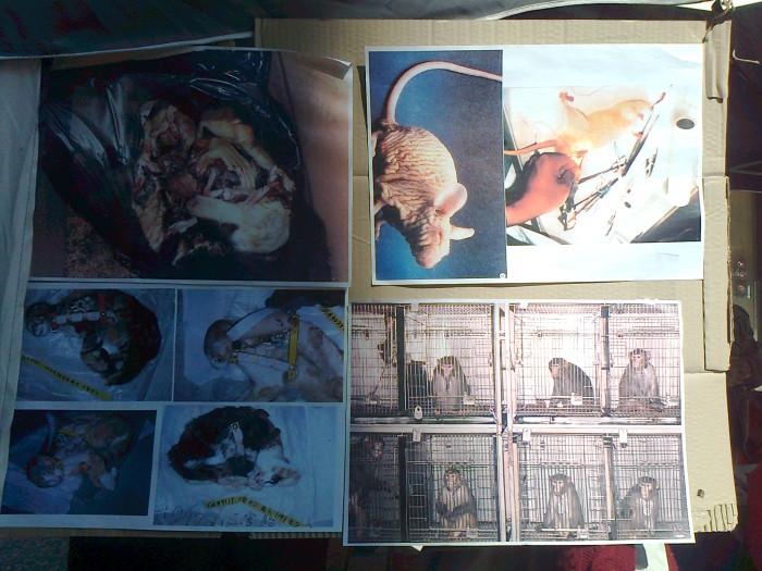 TRENTO - 03.03.2012 - TAVOLO INFORMATIVO SUGLI ORRORI DELLA VIVISEZIONE 114